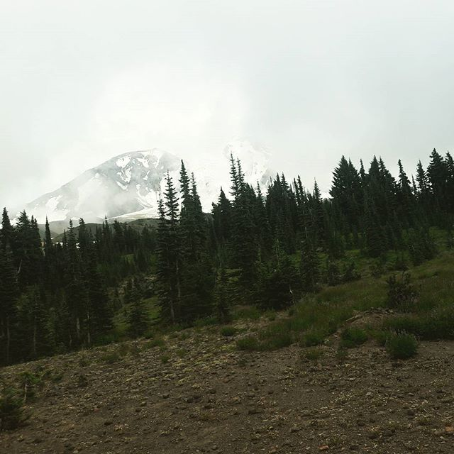 Peekaboo with a mountain #pct #pacificcresttrail #washington