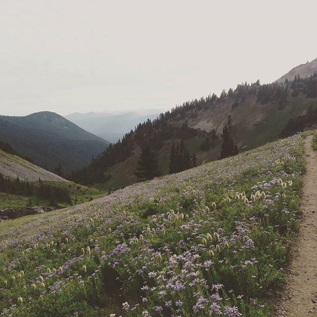 #Flowers. #pct #pacificcresttrail #alpinemeadow