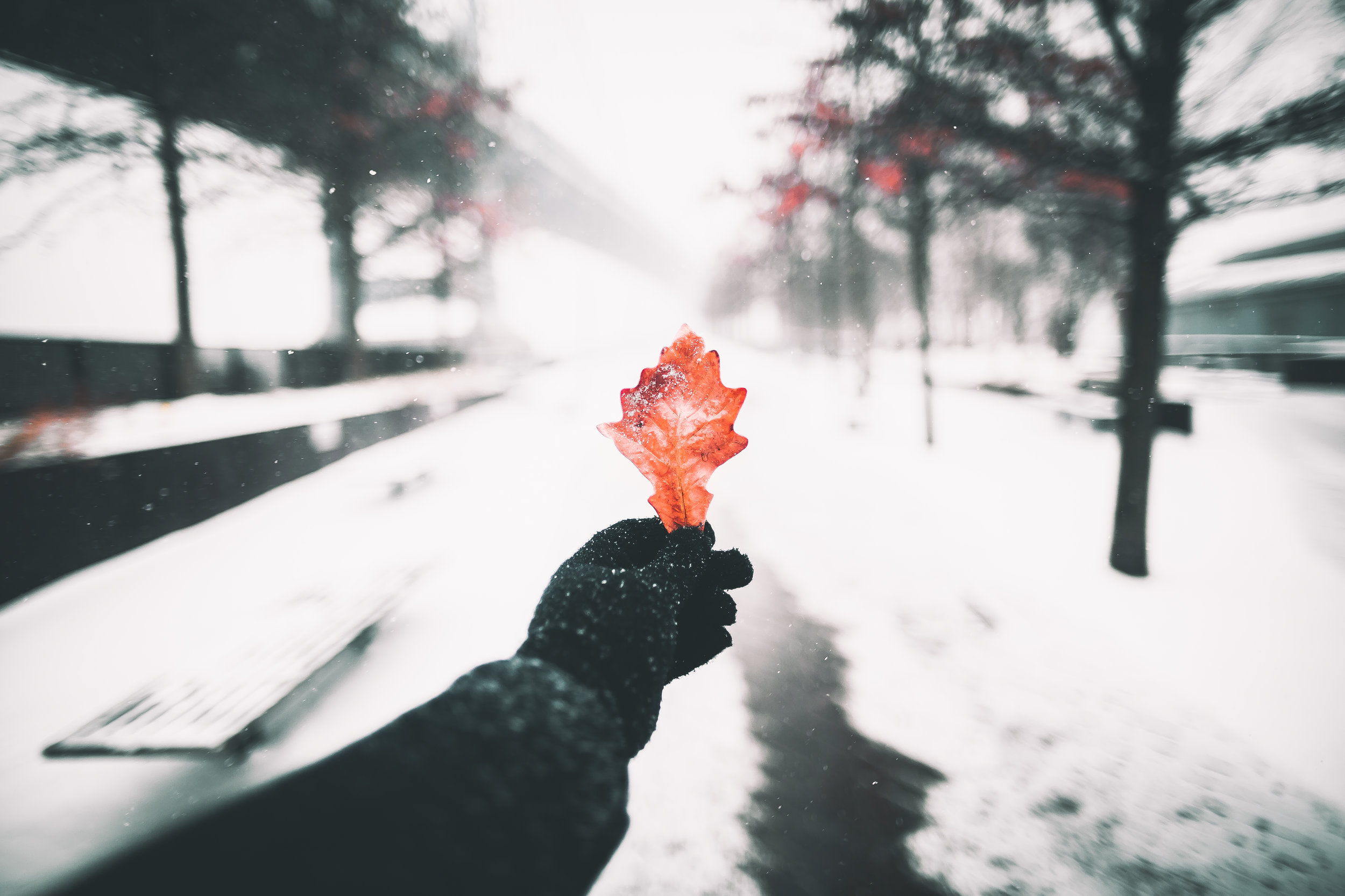 SNOW DAY-4234.jpg