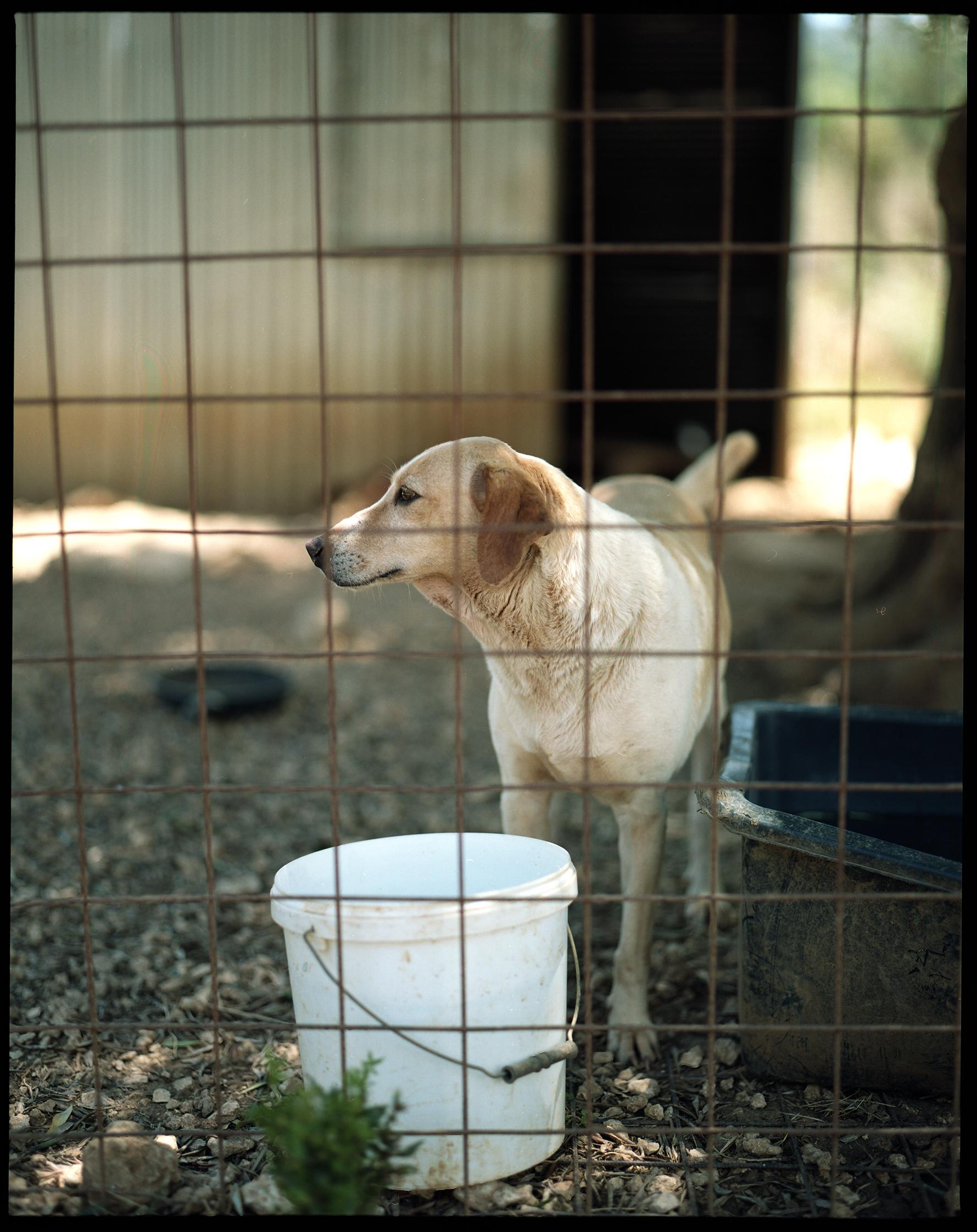 Animal Rescue Kefalonia
