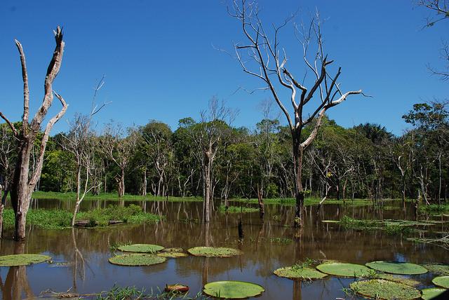 Muito linda a sra., viu, floresta amazônica? (Foto: www.bbmexplorer.com )