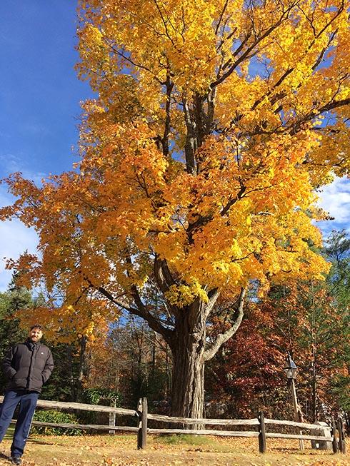Foto com todas as árvores, praticamente