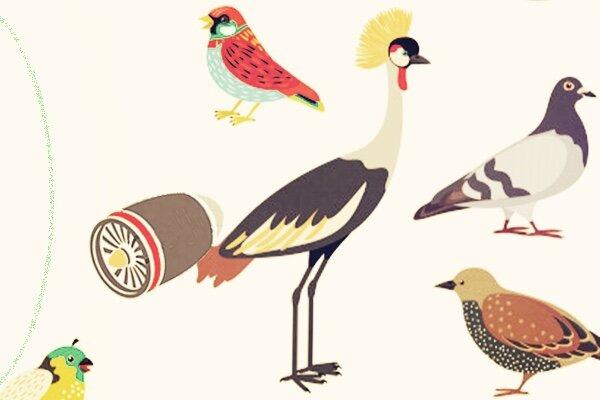 Pássaro com turbina na cauda é tão raro que talvez até mesmo não exista… A natureza é sábia (Ilustrações do  Freepik  modificadas pelo editor do  rivotravel )
