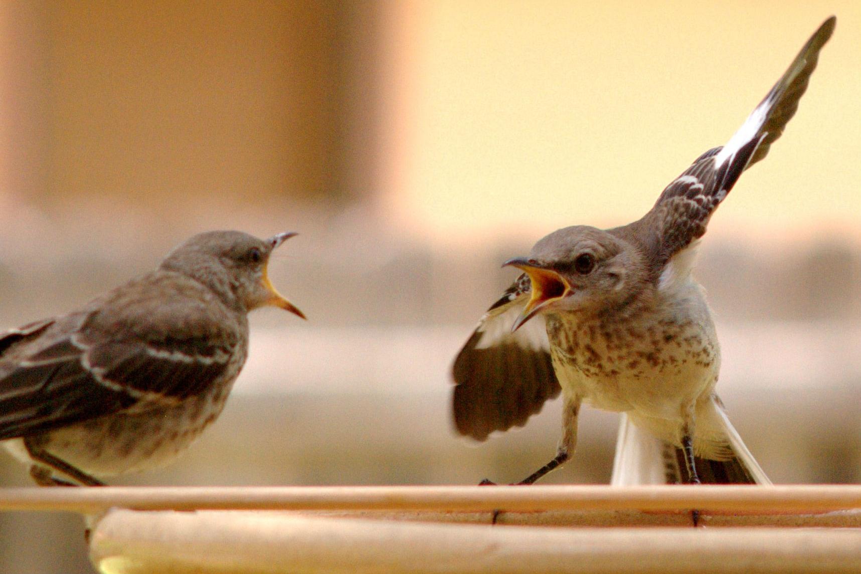 bird-argument.jpg