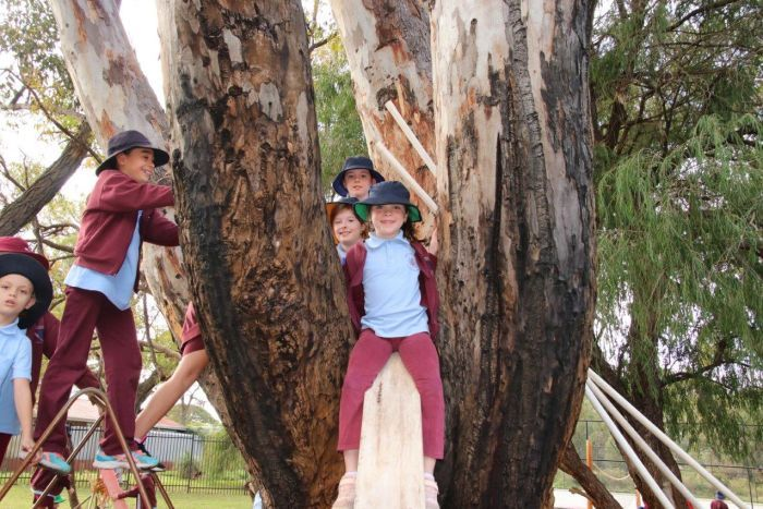 PHOTO: Climbing and building helps children at West Greenwood calculate risks and make decisions. (ABC News: Rebecca Carmody)