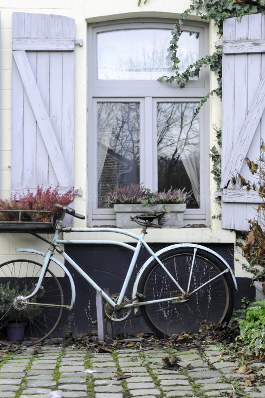 Belgian Blue Bike