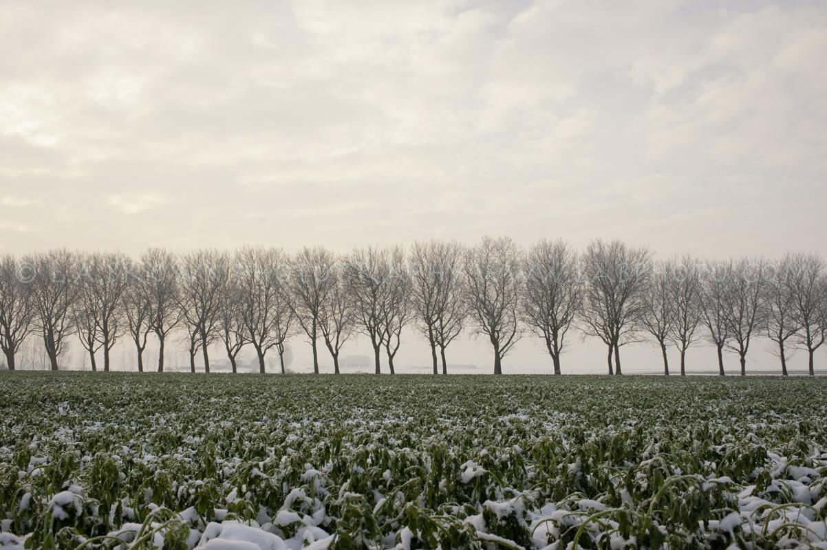 Trees Belgium