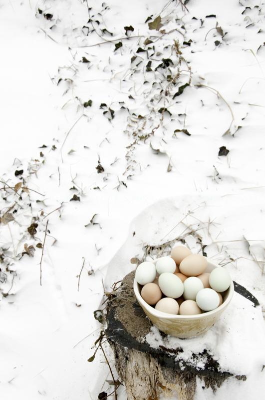Eggs, Pilot Hill, West Tisbury