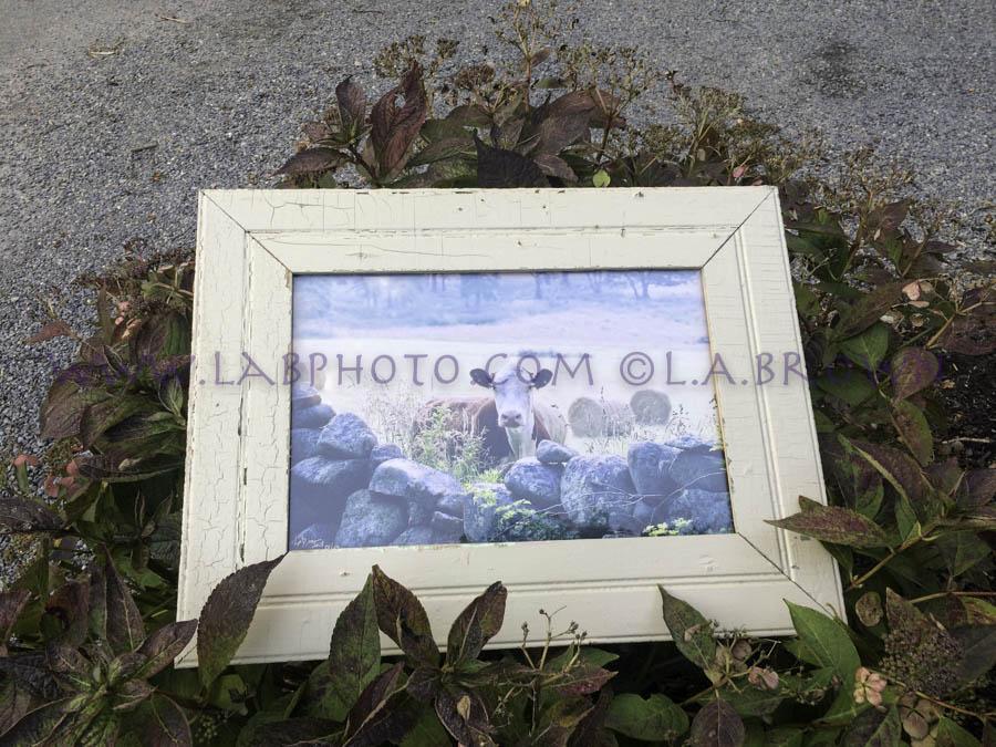 LABPHOTO Framing  - 40.jpg