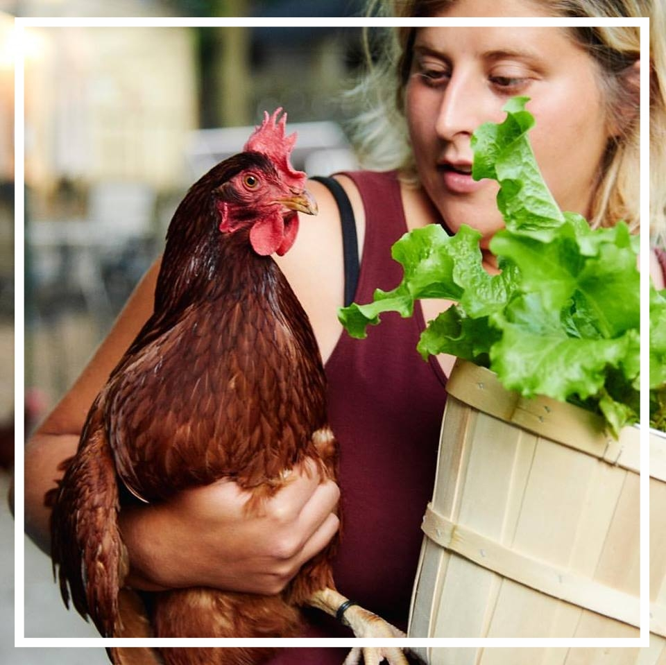girl lettuce chicken