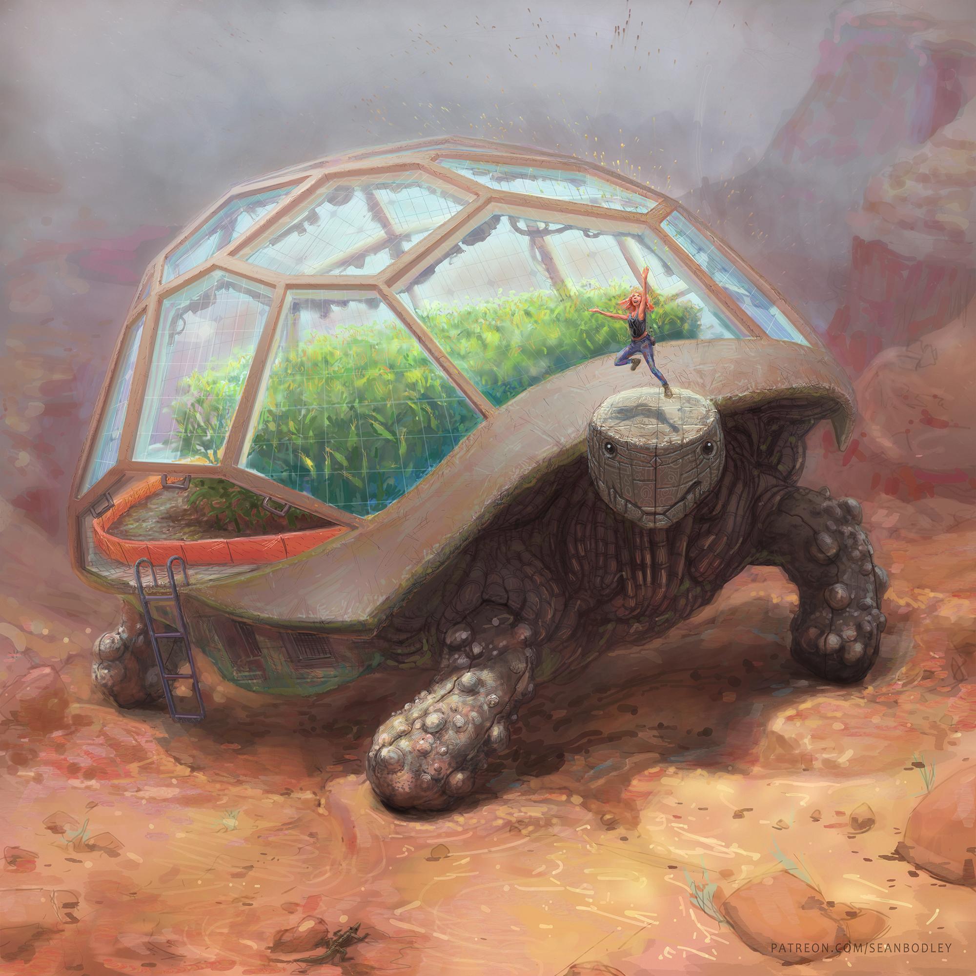 Tortoise Terrarium