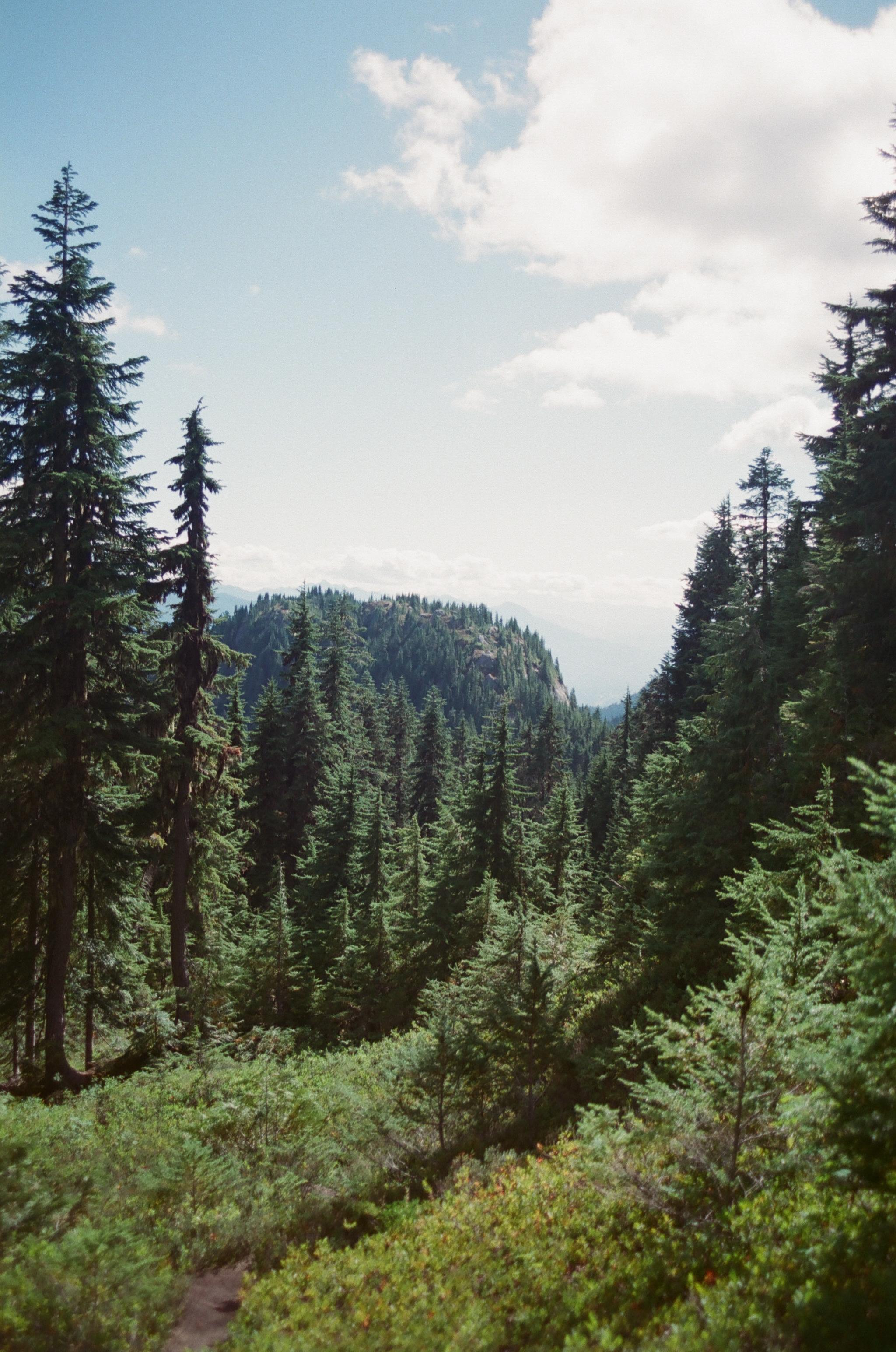 Green, Summer 2017