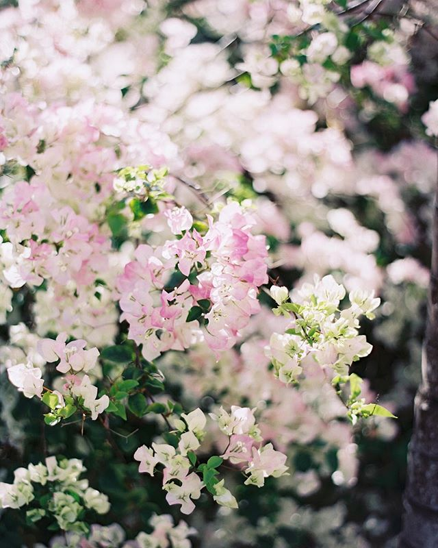 Always in bloom ___ 📷: @jessicalorren