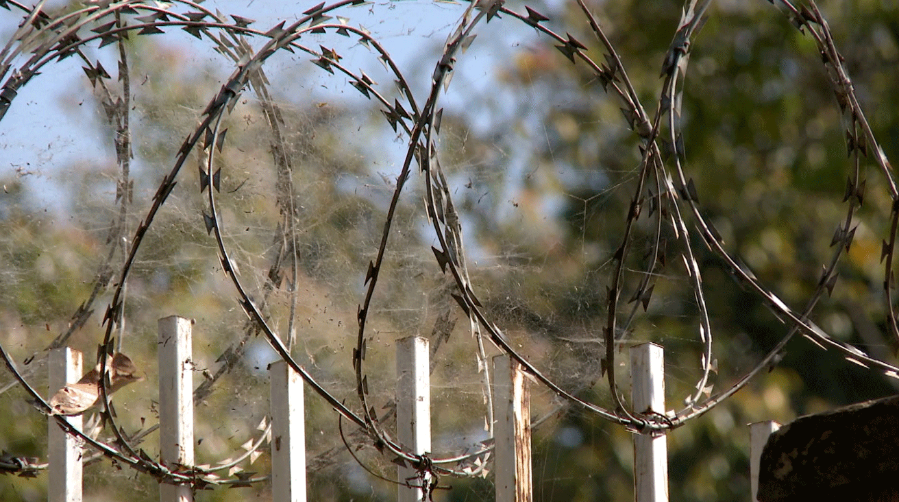Uganda-Barb-Wire.png