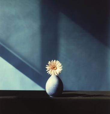 african daisy. 1982