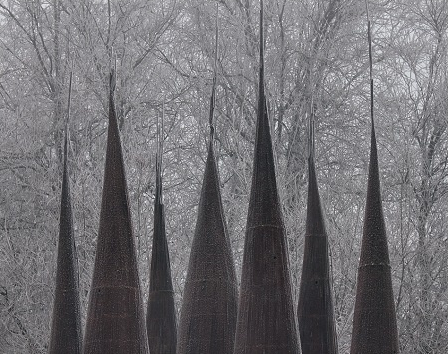 forest. 2000