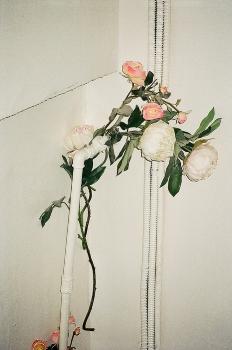 et cetera_368_Artist_photography_art photography_wolfgang_tillmans_flower_pipe.jpeg