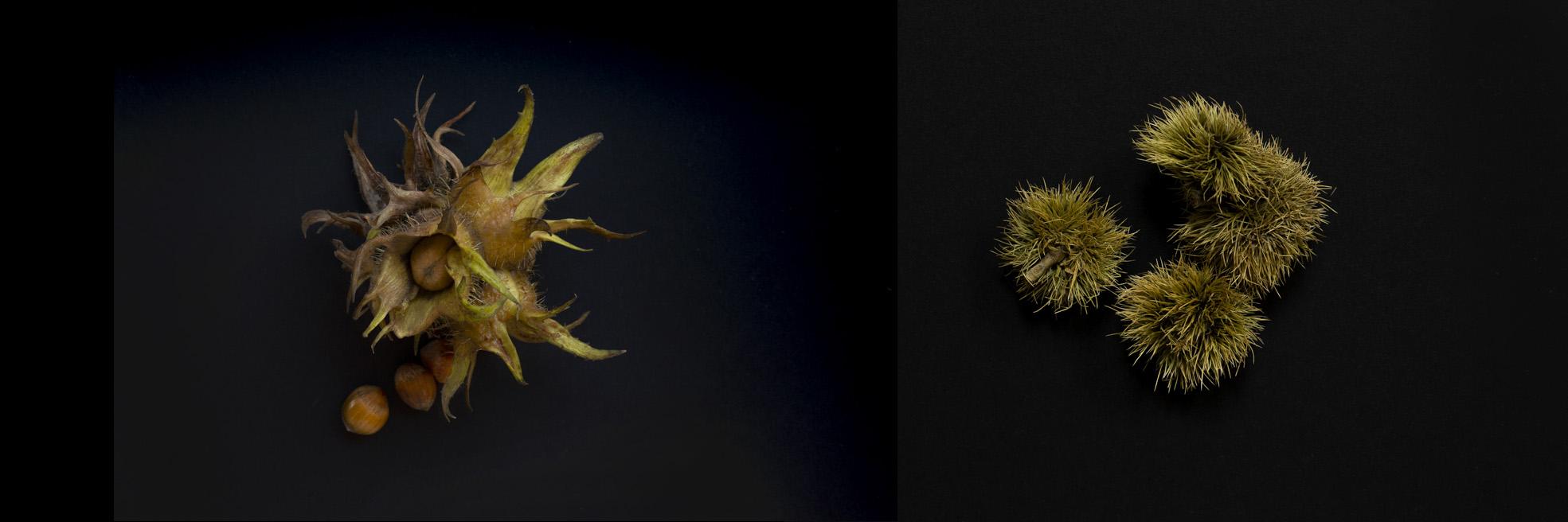 Eugene_Langan_Photography_Dublin_Ireland_Foraging_Autumn_Equinox-3x2.jpg