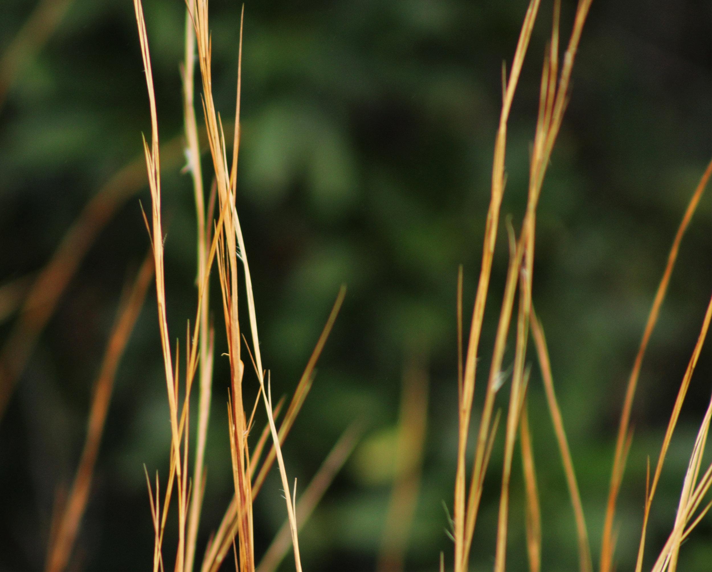 Weedstalks8x10.jpg