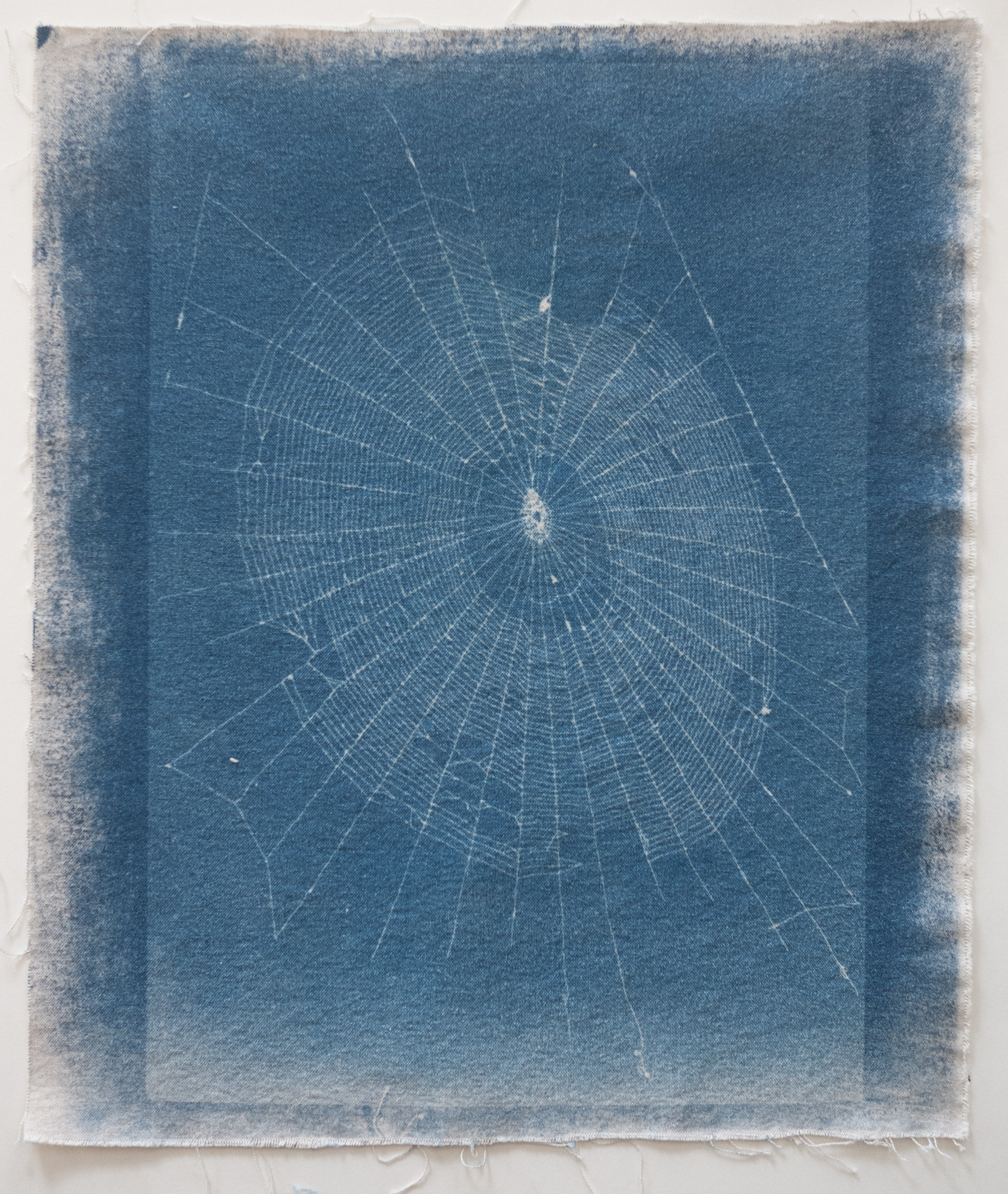 02_Webs-02.jpg