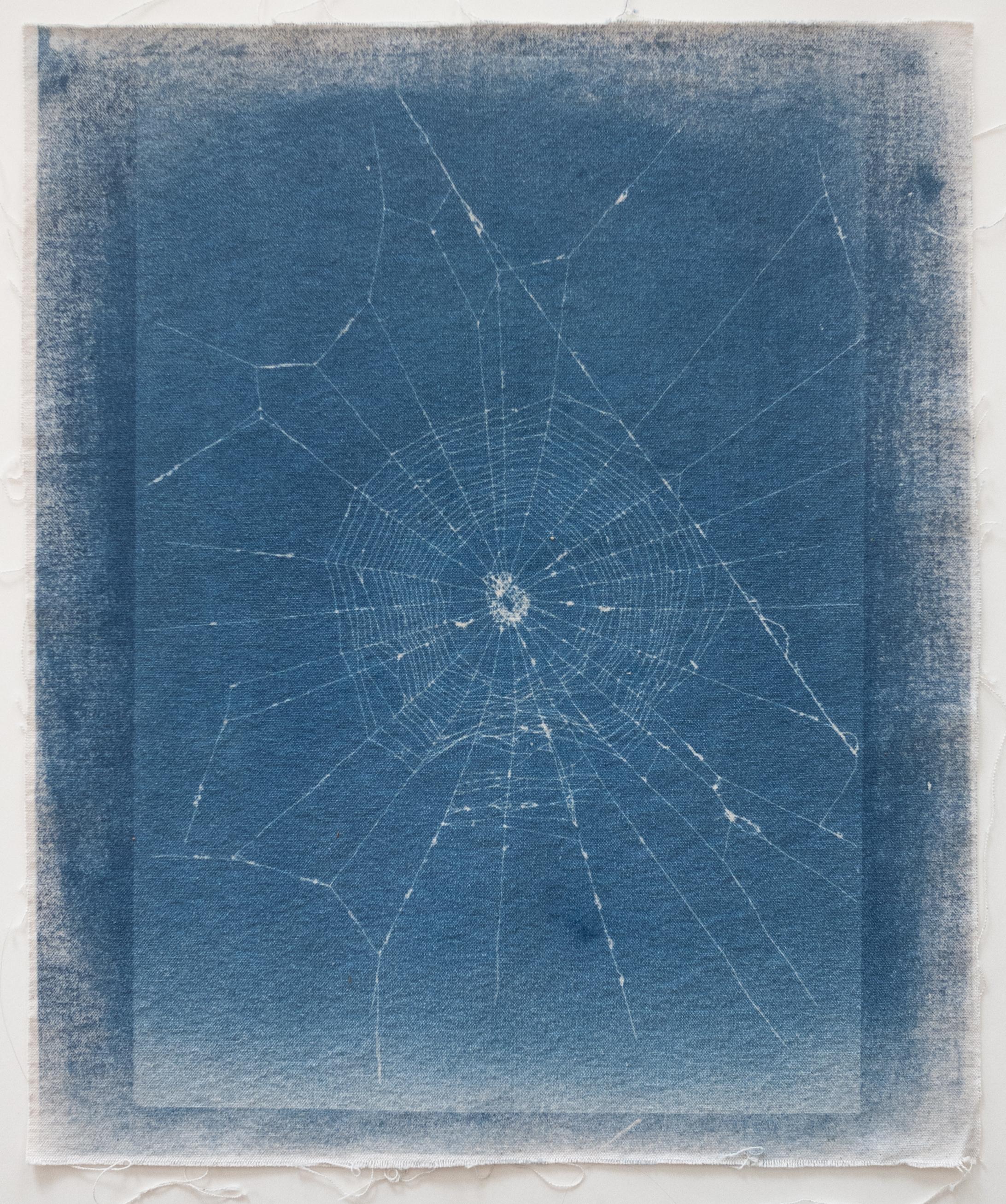 03_Webs-03.jpg