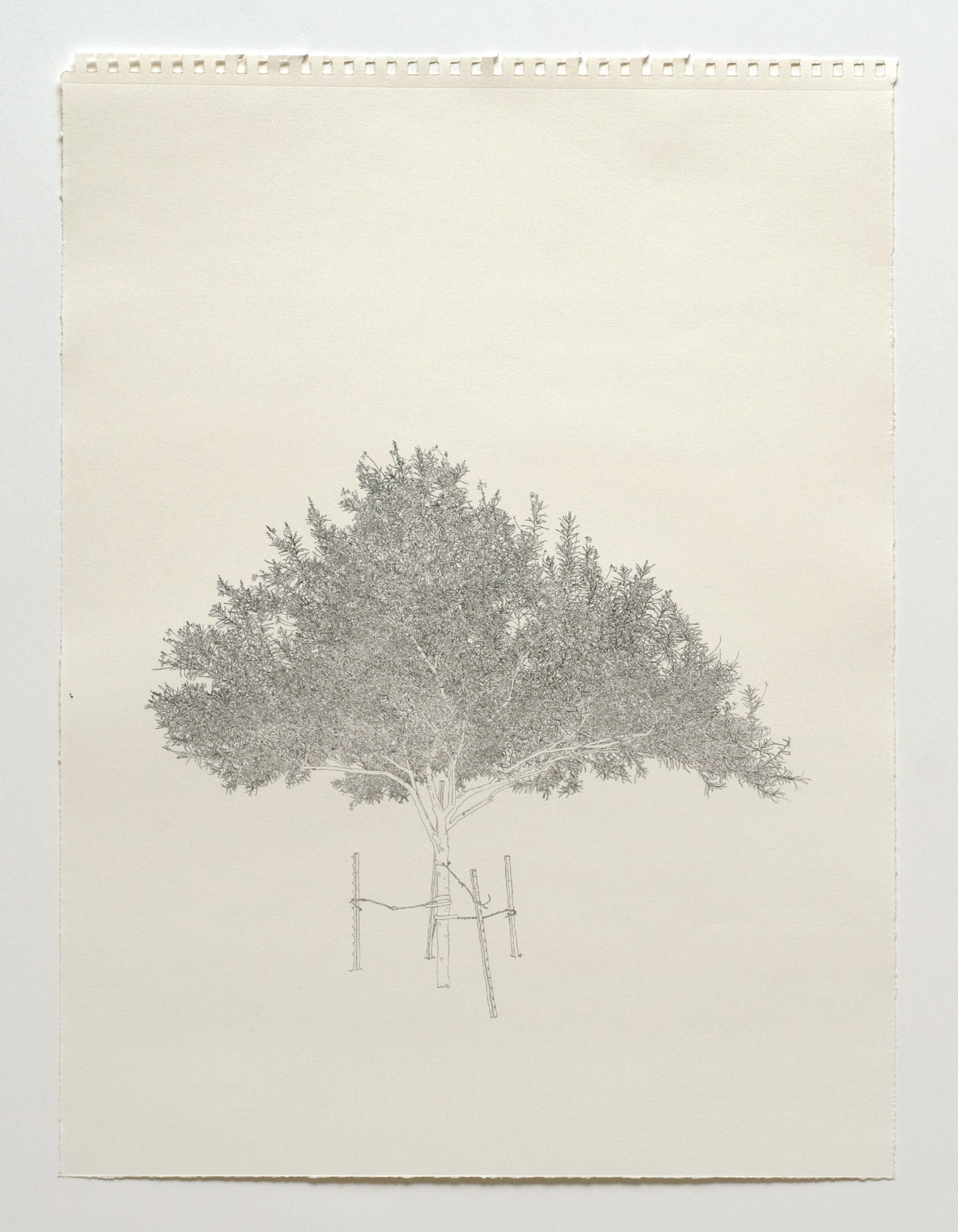 05_trees_02.jpg