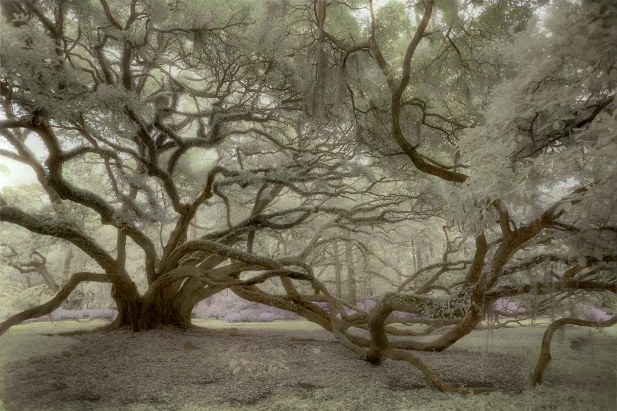 Seven Sisters © Harriet Blum