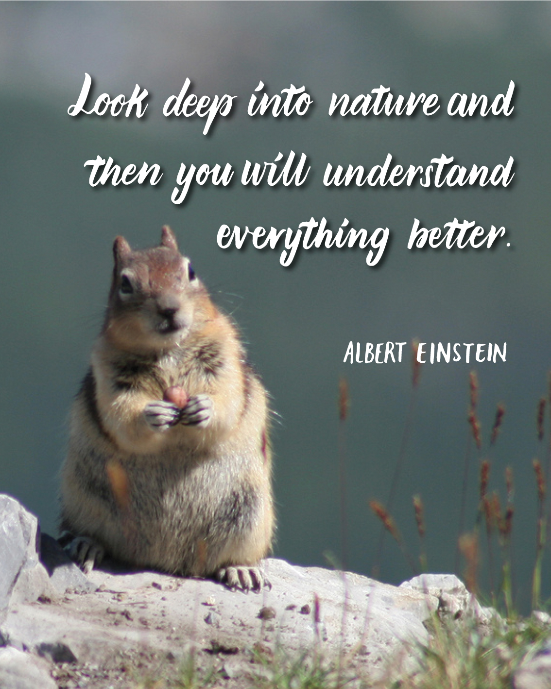 DONE-look-deep-into-nature,-and-then-you-will-understand-everything-better---albert-einstein.jpg