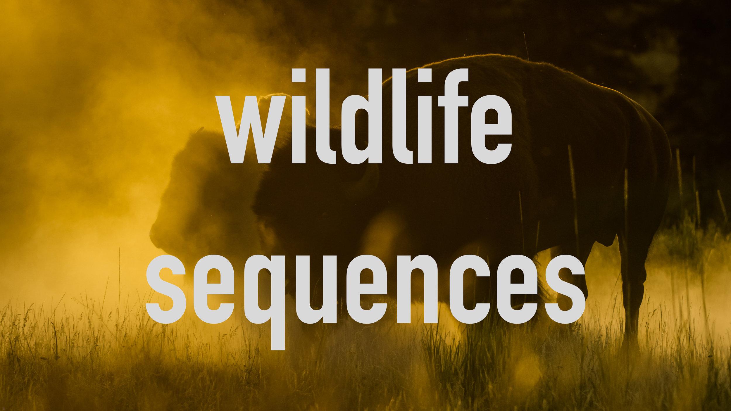 wildlifesequences.jpg