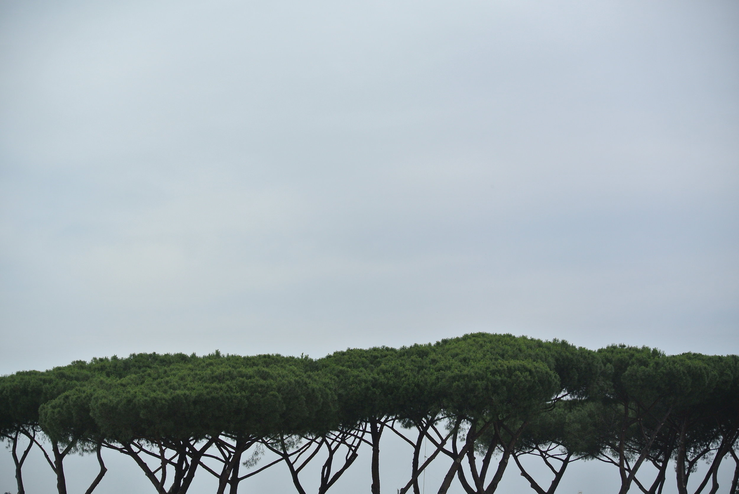 Meet George Jetson: pine trees on stilts to the stratosphere. Rome, EUR; May 2018.  ©Pamela Kerpius