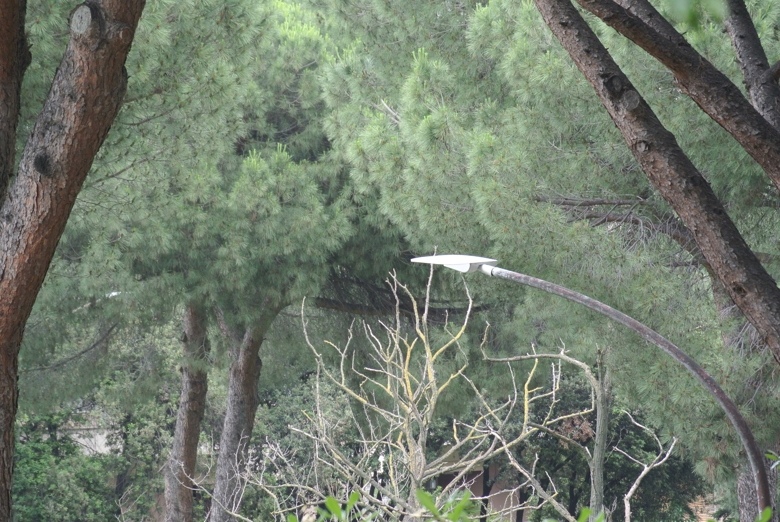 Alien Outgrowth: lamplight tentacles reach through the trees. Rome, EUR; May 2018.  ©Pamela Kerpius
