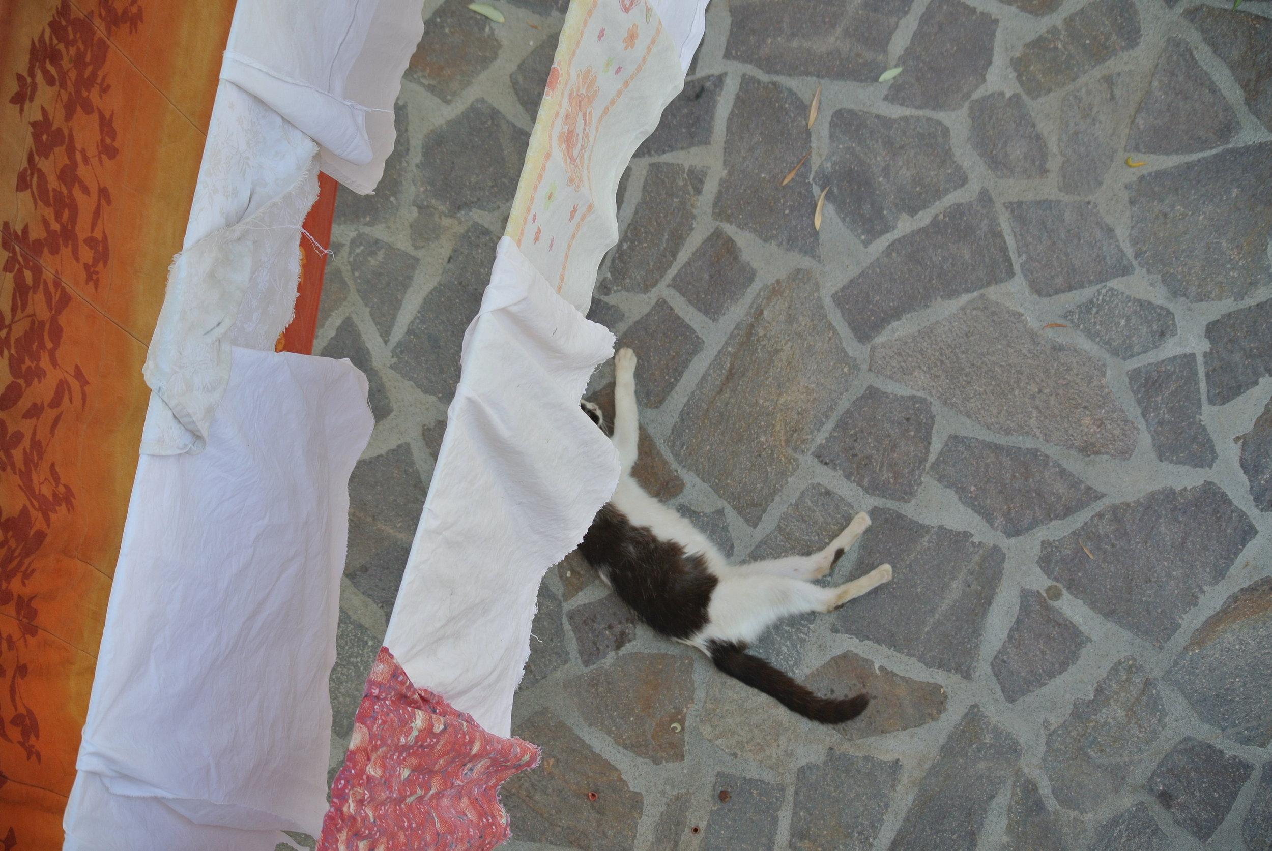 A cat stretches on the stone. Longobardi, Italy; 30 May 2018. ©Pamela Kerpius