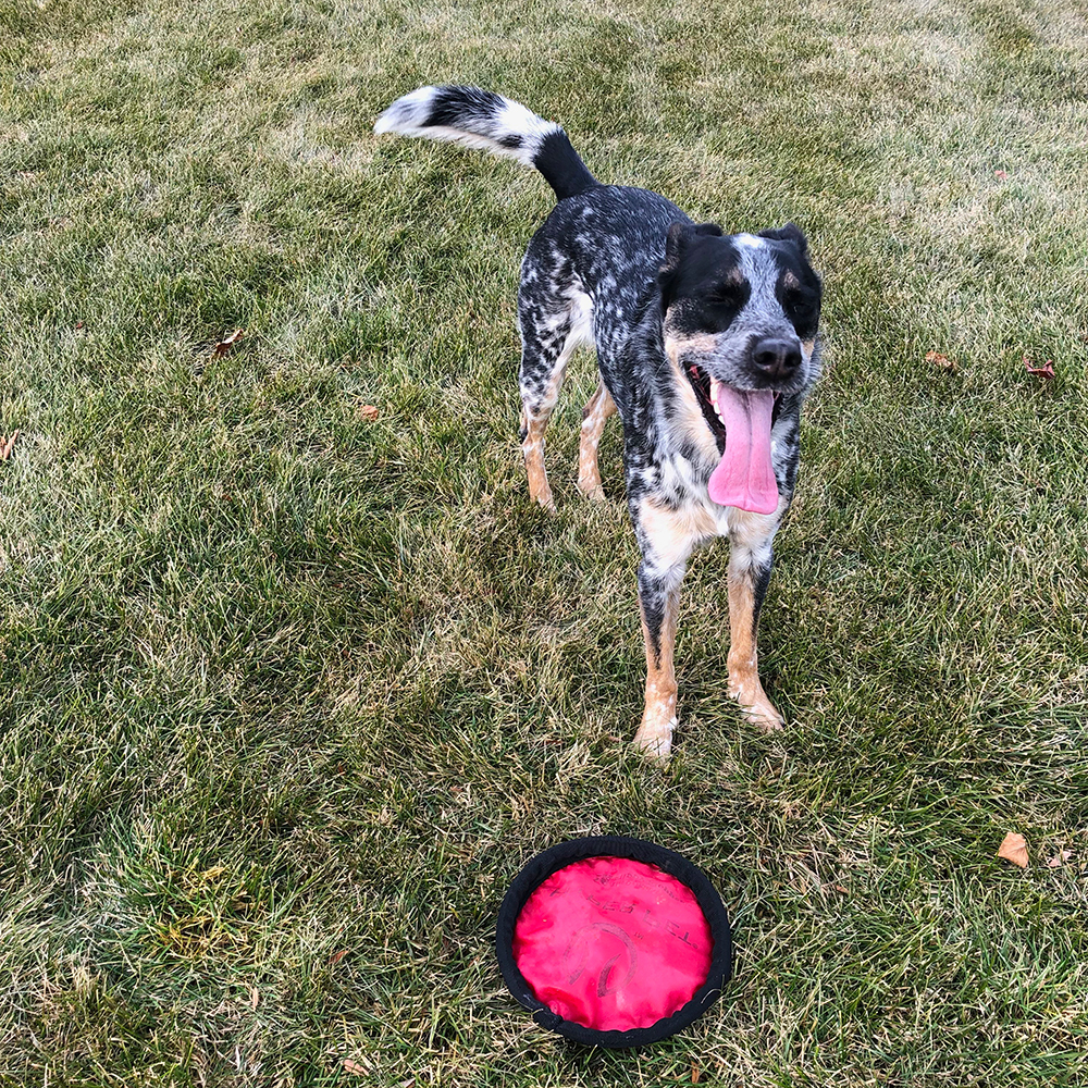 Nova - Director of Fetch Operations