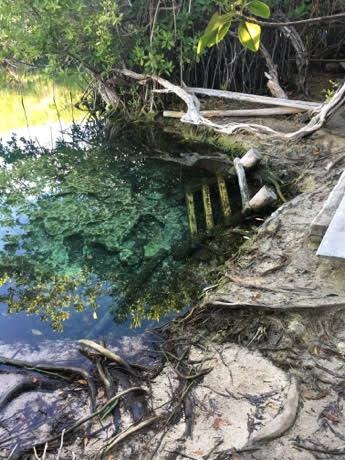 The entrance to our private Cenote in Tulum.