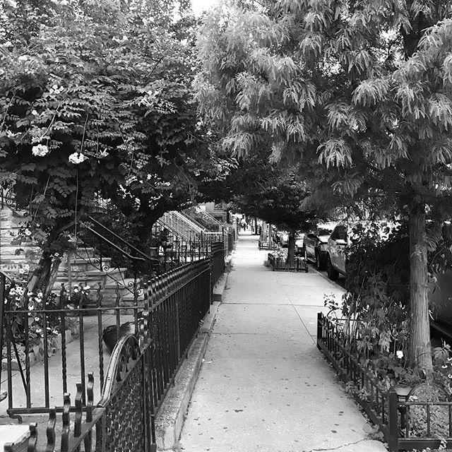 A magical portal in Sunset Park. #newyork #sunsetpark #brooklyn • • • • • • #photo #view #portal #blackandwhite #just_newyork #ig_nycity #street #nyc #nycityworld #grayscale #newyorkcity @newyork_instagram #grayscale #photography #tree