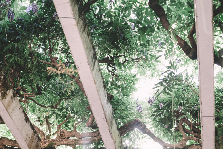 BatPedro-4739.jpg