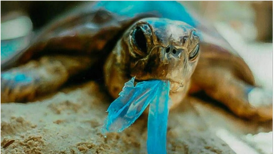 3. animals are eating plastic, but why? - How convincing is plastic as food, really? An excellent read from Forbes shares more on the top 5 ways plastic harms the planet, also revealing how plastic ends ups seeming like a tasty dinner.