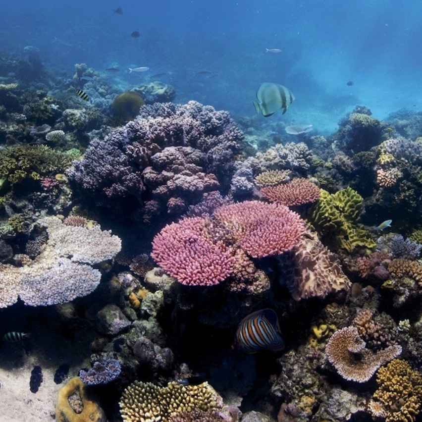 eco-friendly sunscreen - Check out this blog's list of non-toxic sunscreens that will help preserve coral reefs.