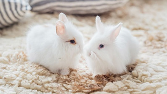 6. do your favorite brands test on animals? - Cruelty Free Kitty is a blog I discovered when checking out my own beauty brands. Low and behold, most of the beauty brands I was using were on the bunny approved list.