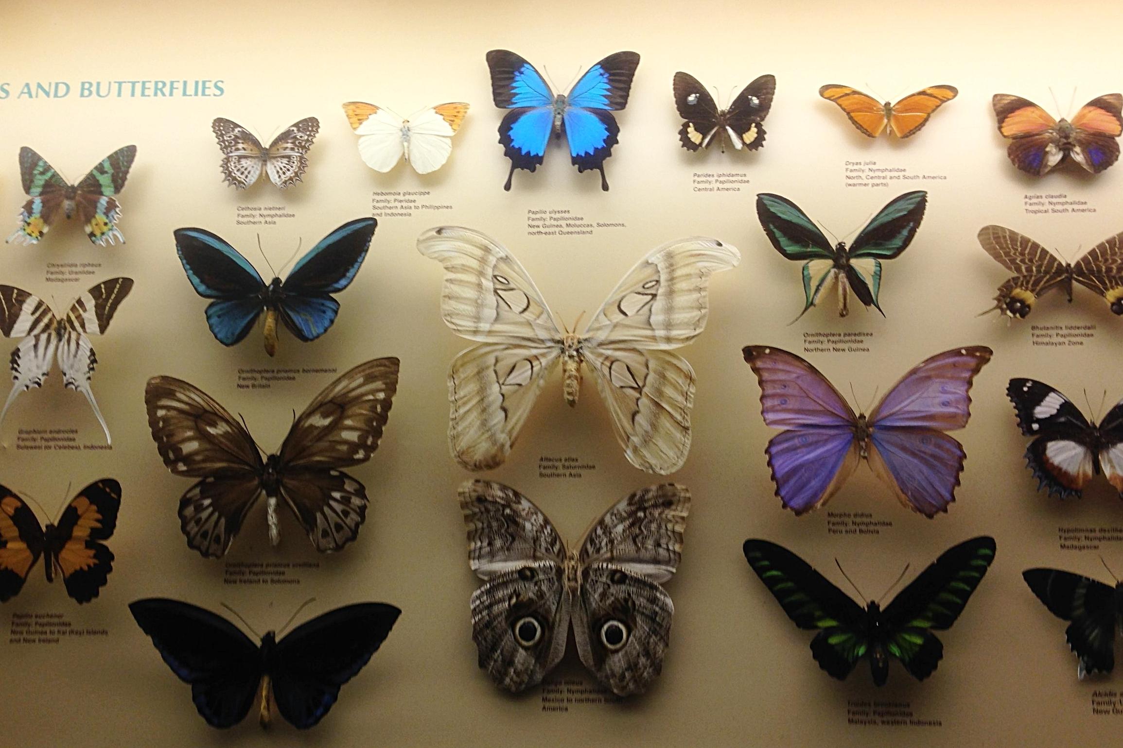 australianmuseum4.jpg