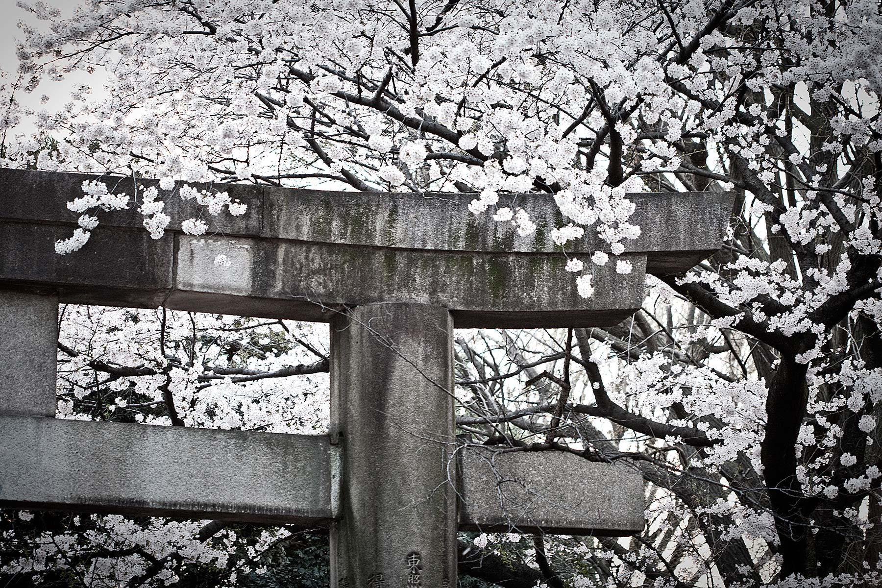 21_Asia_Trip-9181.jpg