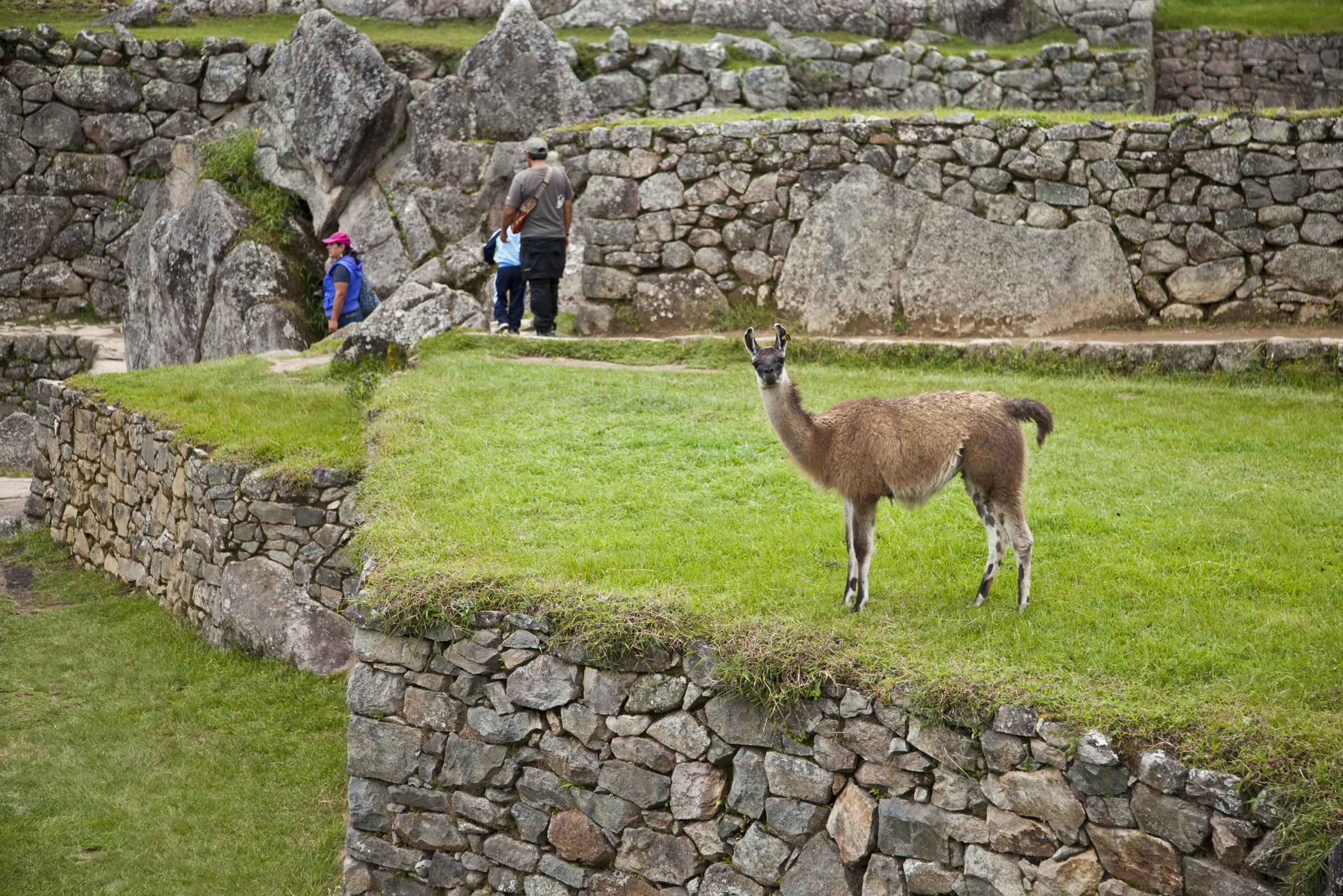 Machu Picchu-320.jpg