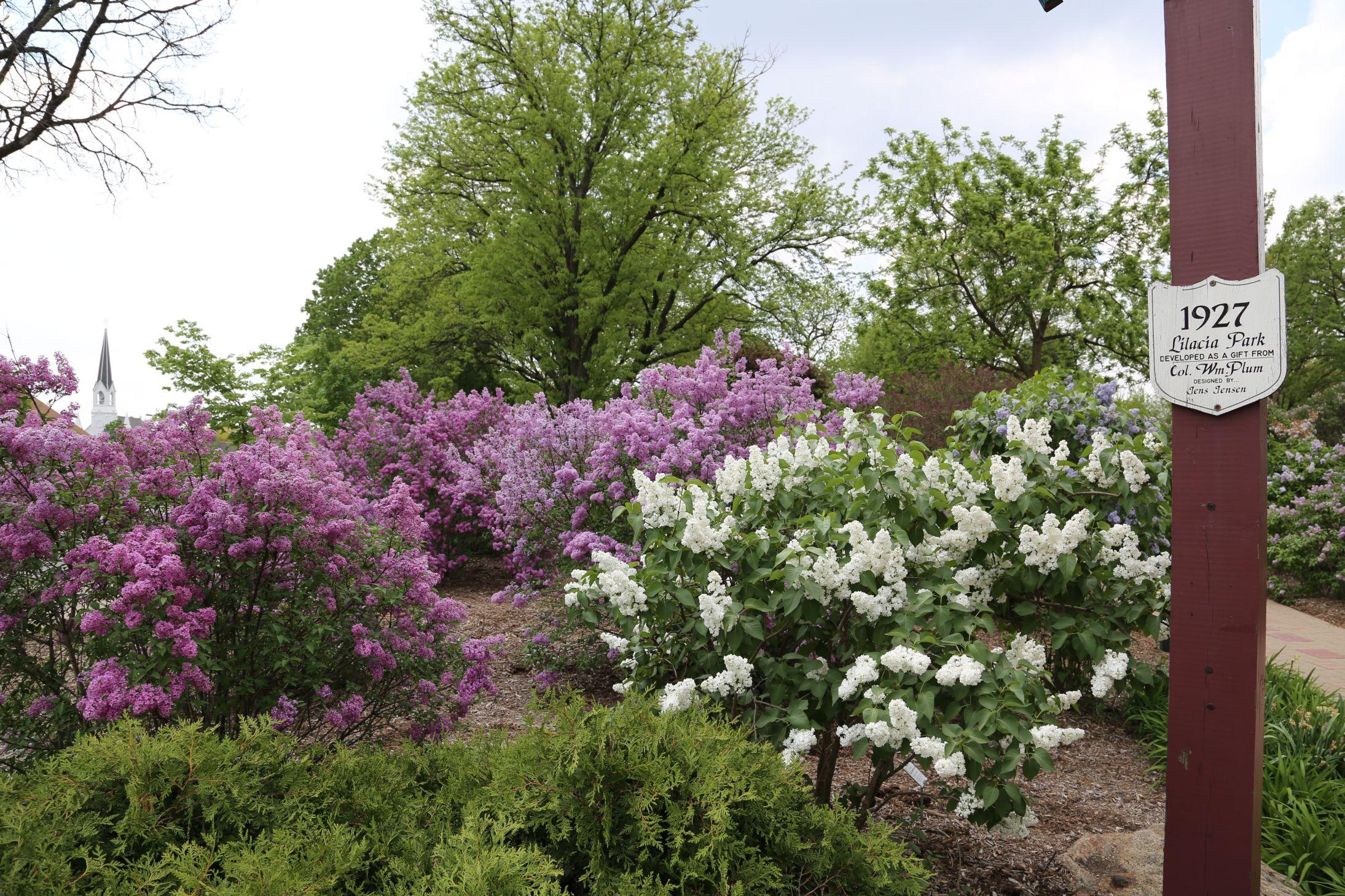 Lilacia Park, Lombard, Illinois