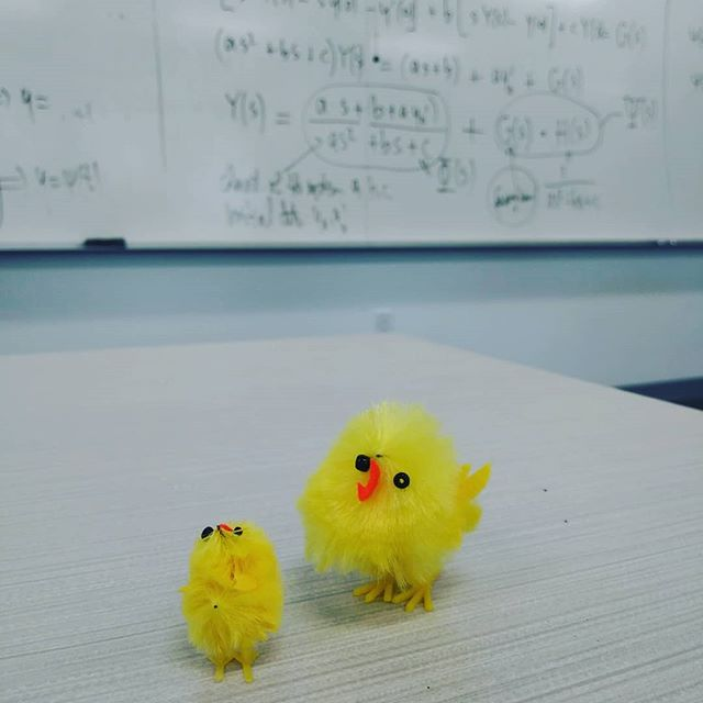 "My friend in diff eq brings her little chicken to class lol. She gave me one of the ""babies"" today. Thank god bc I was kept looking at her and thinkin ""Damn, I really need a lil chicken to get through this class"". Two more days left. Anyway the chicken is a nice fiddle when you need it....and I do. 😝😊 #sensoryactivity #trichotillomania"