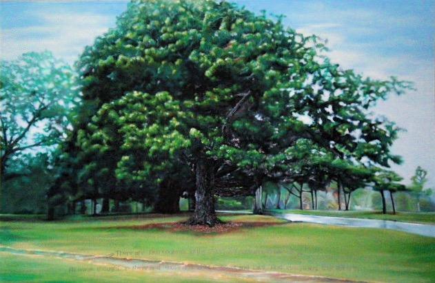 %22Maggie%22 - Magnolia Tree.jpg