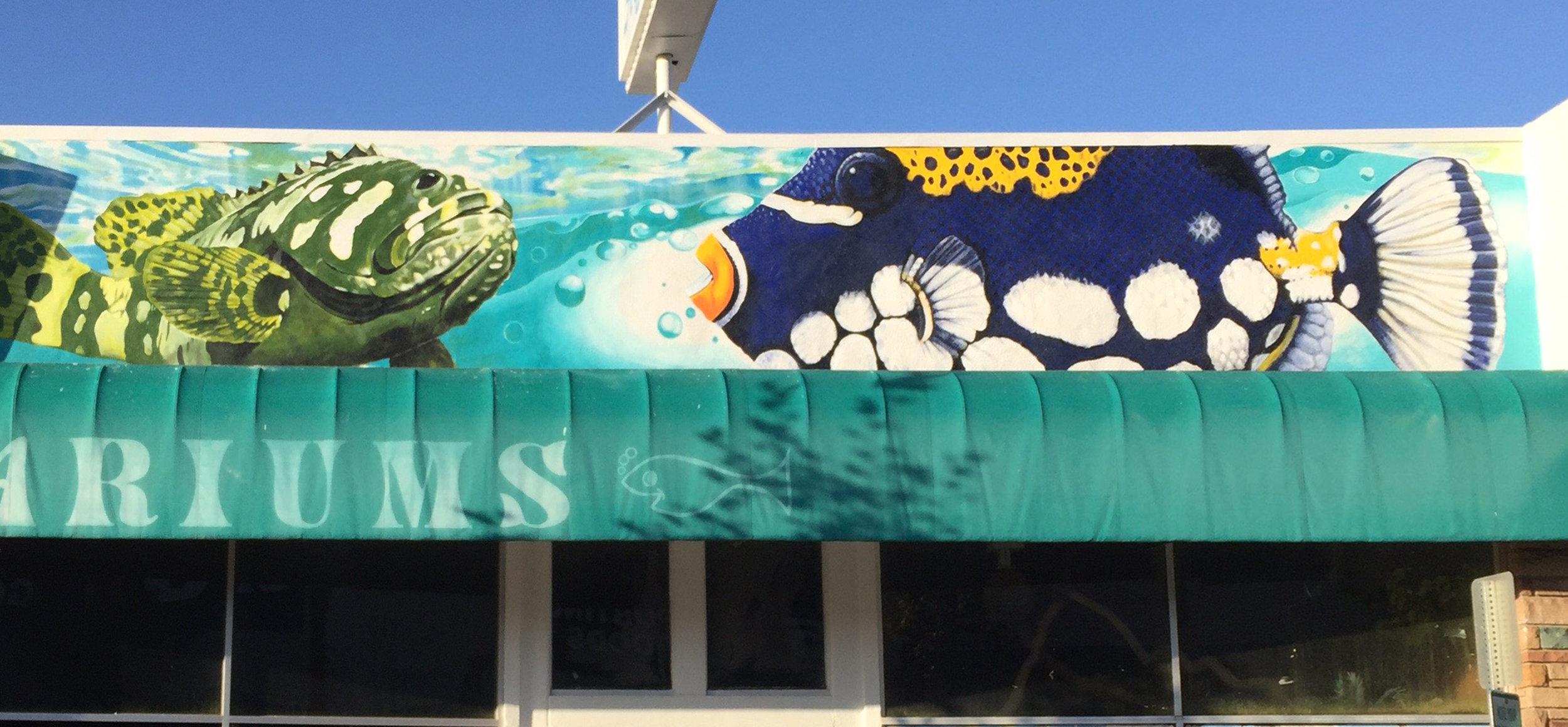 Apex aquarium, Culver City, California