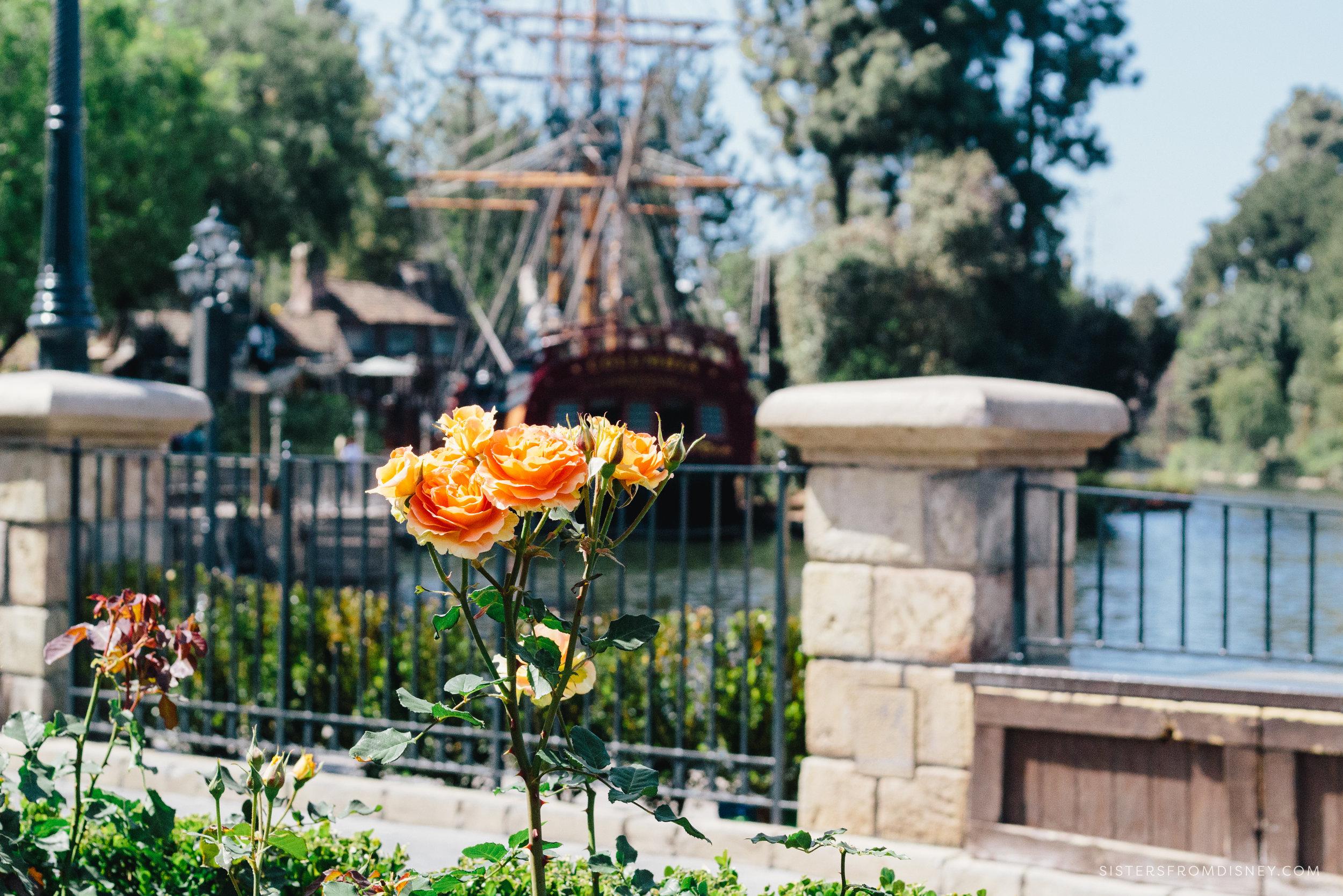 2018April_SFDblog_DisneylandApril_Jaycee_Watermark-2168.jpg