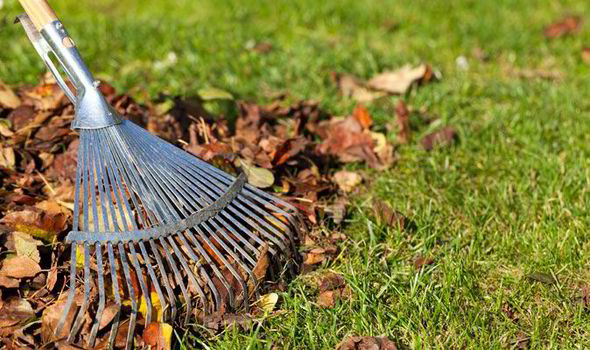 Keep it clean - Raking your lawn and picking up any debris isn't only going to tidy it up but when the winter comes, it will stop any spots in your lawn from being smothered and cause brown, dead spots.