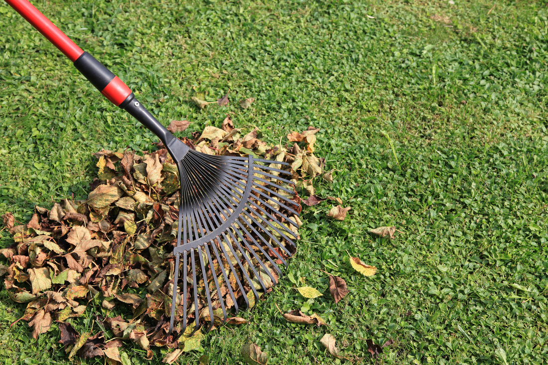 Keep it Clean - Pick up debris and leaves! Leaving it there can cause dead, brown spots once the weather warms up!