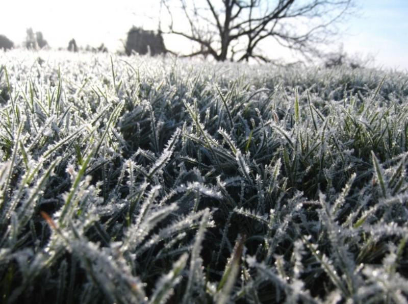 winter-lawn-1024x764.jpg